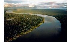 Iniciativa apoiada pelo Banco Mundial prevê recuperar 30 mil hectares da Amazônia até 2023