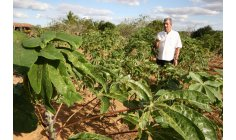 Delegação do governo paraguaio visita projetos de agricultura familiar no Brasil