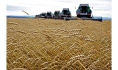 فرنسا تتحرك لمنافسة الدول الأمريكية في تصدير الحبوب إلى المغرب