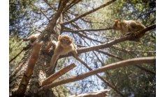 الانقراض يهدد 15 % من الحيوانات والنباتات في الغابات المغربية