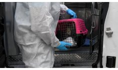 The fate of pets forgotten by COVID-19 Patients who died in New York have been widely recorded. But what about the cats and dogs that got seriously sick?