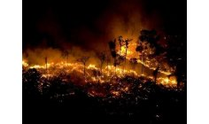 Amazon forest has the highest number of fires since 2007