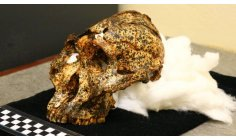 The discovery of the 2 million-year-old 'cousin' skull that brings new clues to evolution