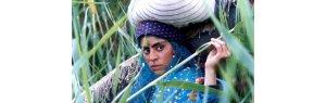 Tip: 15 precious films for you to know Iranian cinema