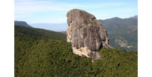 New threat to the Atlantic Forest, in the midst of the crisis