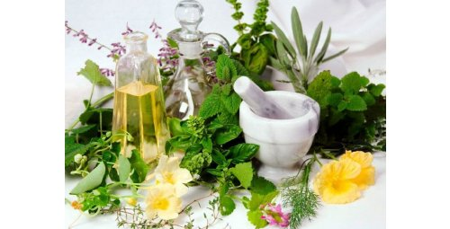 7 healing plants you should surround yourself with