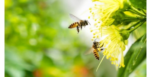 Largest bee corridor is being built in Brazil. It is necessary to take care of important species!