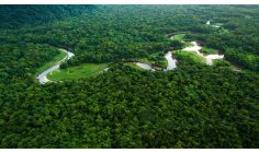 Amazon Rainforest must condition Biden's support to Brazil in the OECD, proposes entity