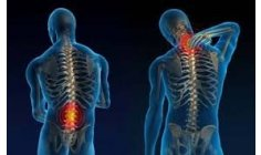 Yale scientists recover injured spine with stem cells