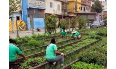 Former skid row in RJ becomes vegetable garden and helps 800 families in the pandemic