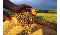 Four corporations monopolize 50% of the global seed stock