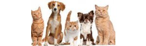 Spain even grants legal human rights to dogs and cats