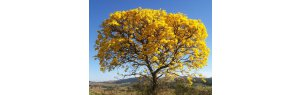Study shows more than 25 thousand species of flora only exist in Brazil