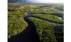 Private companies adopt and will protect 8 parks in the Amazon Rain Forest