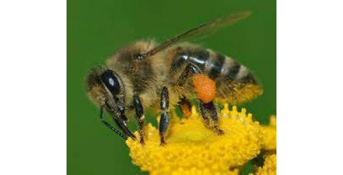 European Union maintains pesticide ban to protect bees