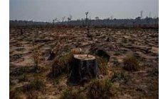 Extractive industry advances in the Amazon rainforest in Peru