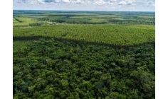 Suzano will connect half a million hectares to preserve biodiversity