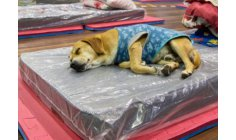 City protects people and pets that live on the streets on cold days